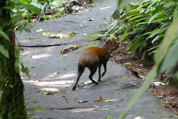 Trekking at Rio Celeste Reserve